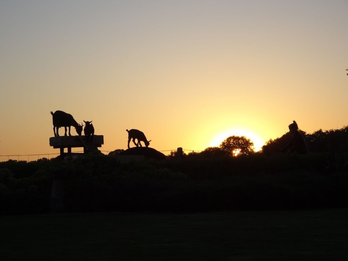 geitenwei zonsondergang